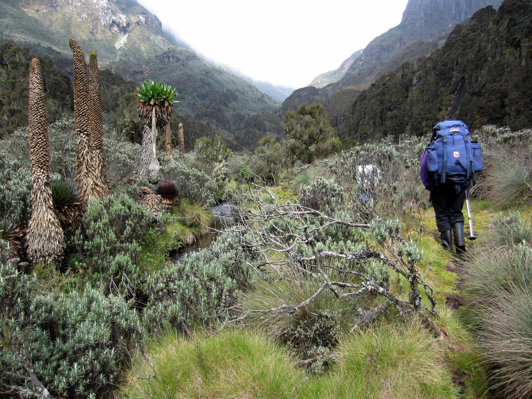 Rwenzori Hiking 2012 2000Px