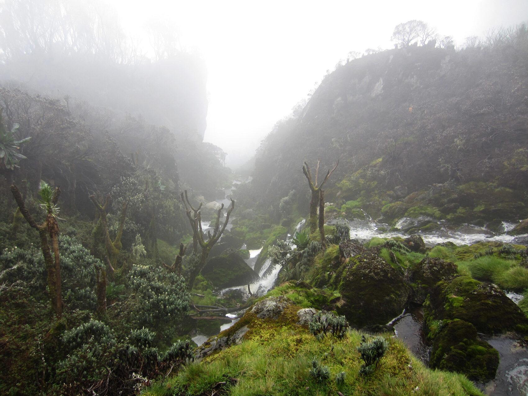 Rwenzori Stream 2012 2000Px